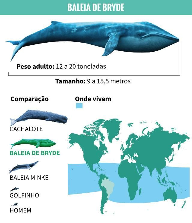 Baleia de Bryde 1