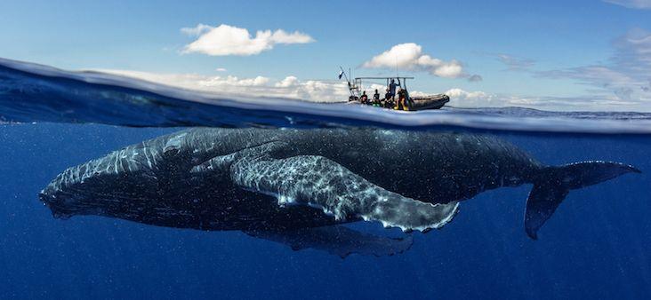 Baleia Jubarte 1